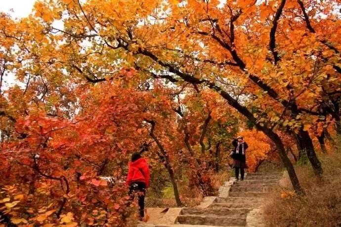 三清山风景区与北京香山公园签订战略发展合作